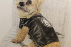 HD Hund Portrait
