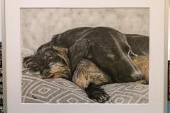Hundeportrait mit Rahmen